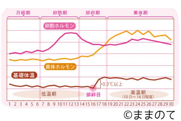 妊娠可能性 高温期14日目 体温下がる