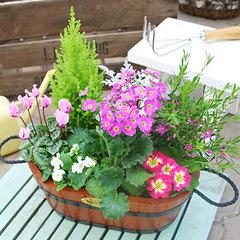 【育てやすい花は】ガーデニング初心者におすすめの植物20選 ...